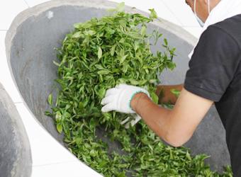 自然発酵で生まれる菌が体で働く、千年以上続く伝統製法のお茶。