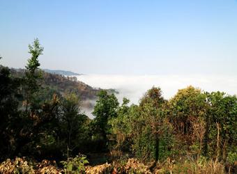 気候や風土の良い雲南省の山岳地帯が生み出す高品質の茶葉。